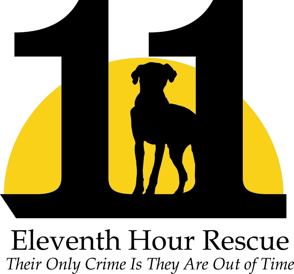 Eleventh Hour Rescue Dogs